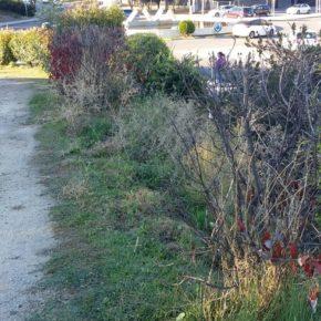 Ciudadanos (Cs) Pinto exige de nuevo al Ayuntamiento que repare el sistema de riego por goteo